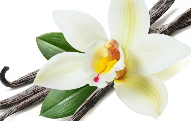 A fűszer, amelyet a mai napig kézzel porzanak be, avagy a madagaszkári bourbon vanília